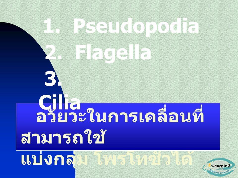 1. Pseudopodia 2. Flagella 3. Cilia อวัยวะในการเคลื่อนที่ สามารถใช้ แบ่งกลุ่ม โพรโทซัวได้