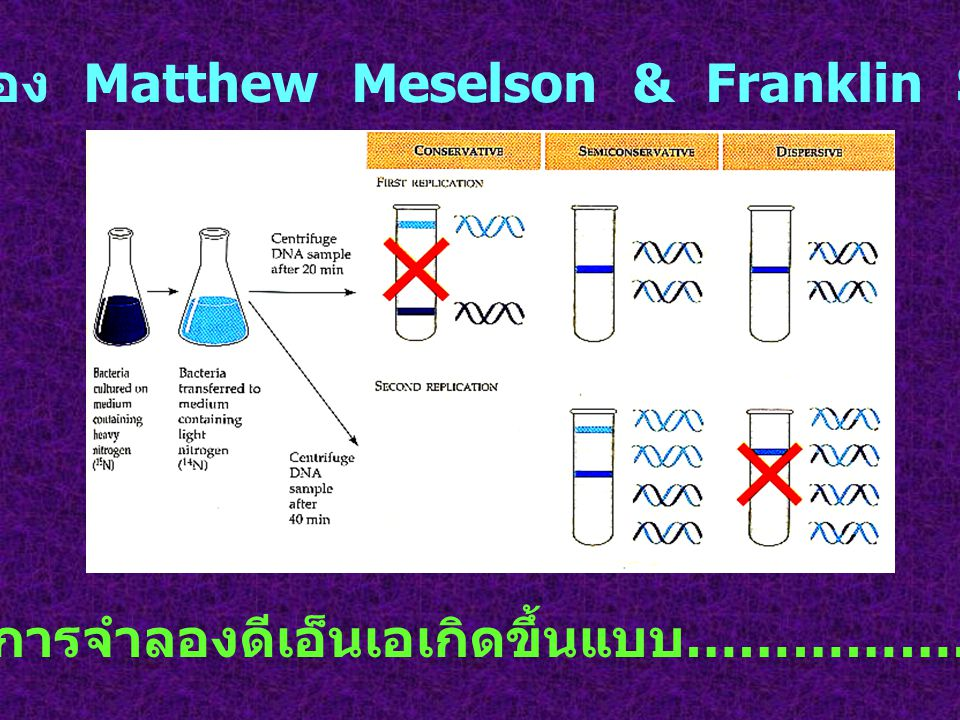 การทดลองของ Matthew Meselson & Franklin Stahl (1958) สรุป การจำลองดีเอ็นเอเกิดขึ้นแบบ …………………...