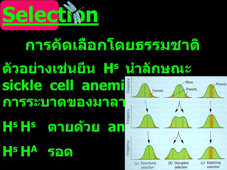 Selection การคัดเลือกโดยธรรมชาติ ตัวอย่างเช่นยีน H s นำลักษณะ sickle cell anemia ในพื้นที่ที่มี การระบาดของมาลาเรีย H s H s ตายด้วย anemia H s H A รอด