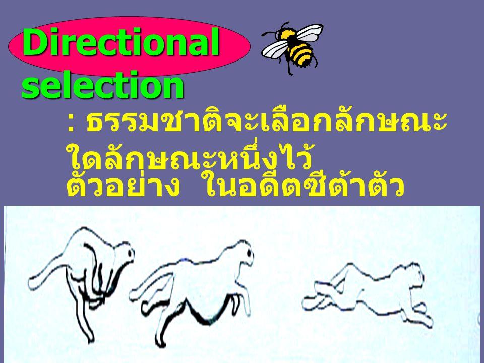 Directional selection : ธรรมชาติจะเลือกลักษณะ ใดลักษณะหนึ่งไว้ ตัวอย่าง ในอดีตซีต้าตัว ใหญ่ปัจจุบันตัวเล็กลง