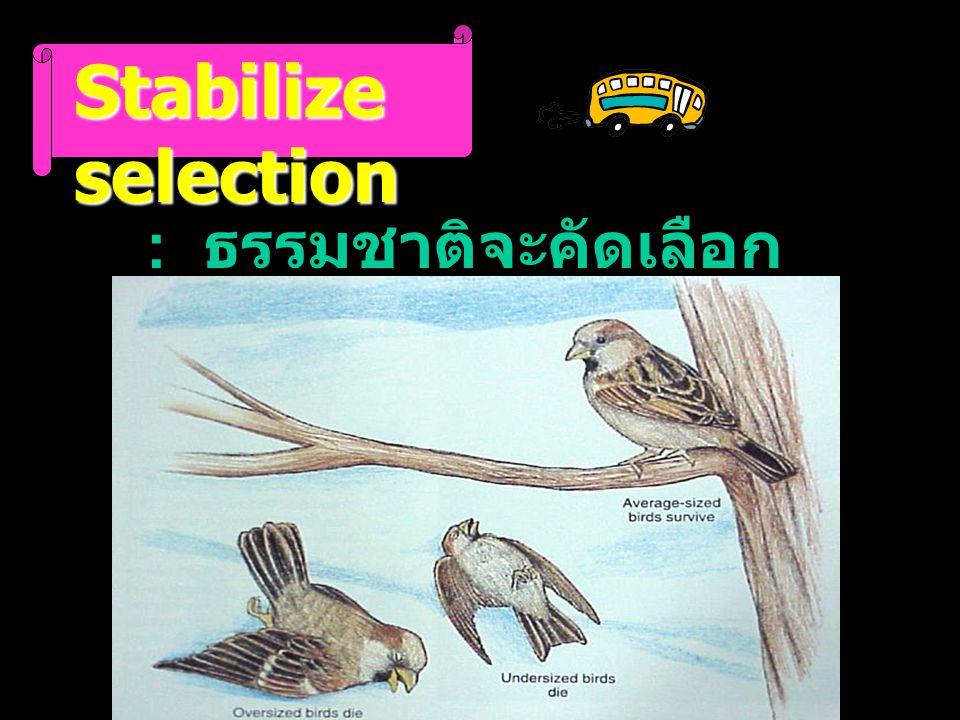 Stabilize selection : ธรรมชาติจะคัดเลือก genotype กลาง ๆ ไว้