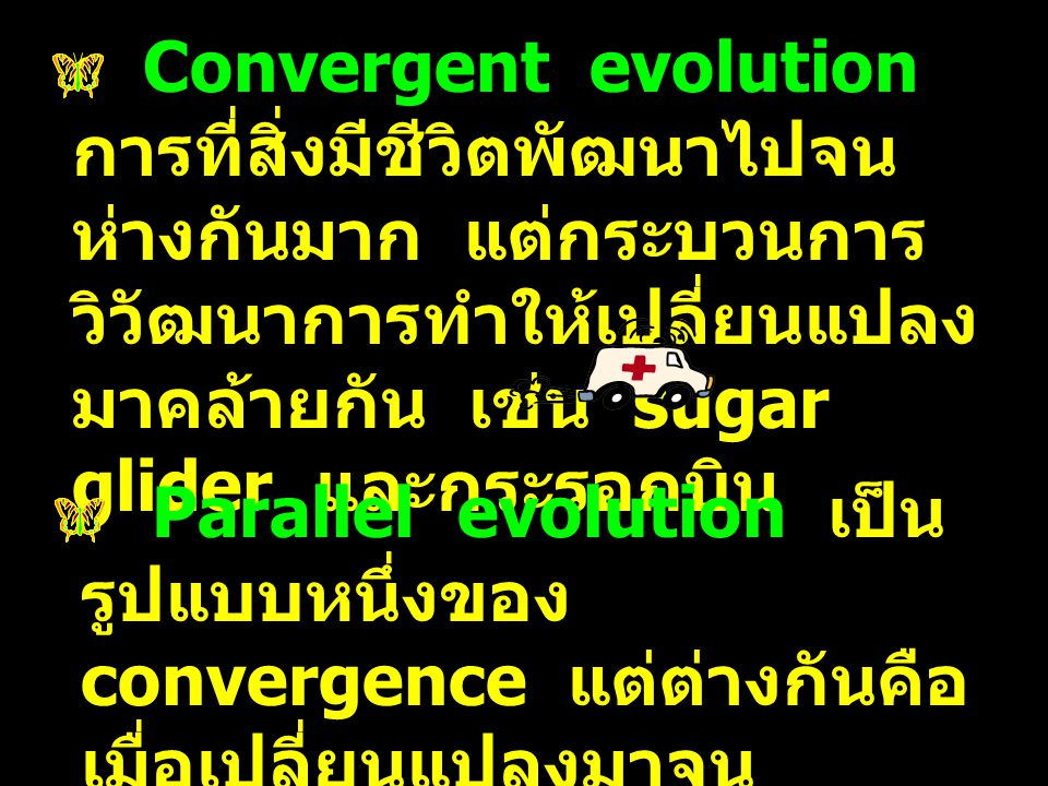 Convergent evolution การที่สิ่งมีชีวิตพัฒนาไปจน ห่างกันมาก แต่กระบวนการ วิวัฒนาการทำให้เปลี่ยนแปลง มาคล้ายกัน เช่น sugar glider และกระรอกบิน Parallel
