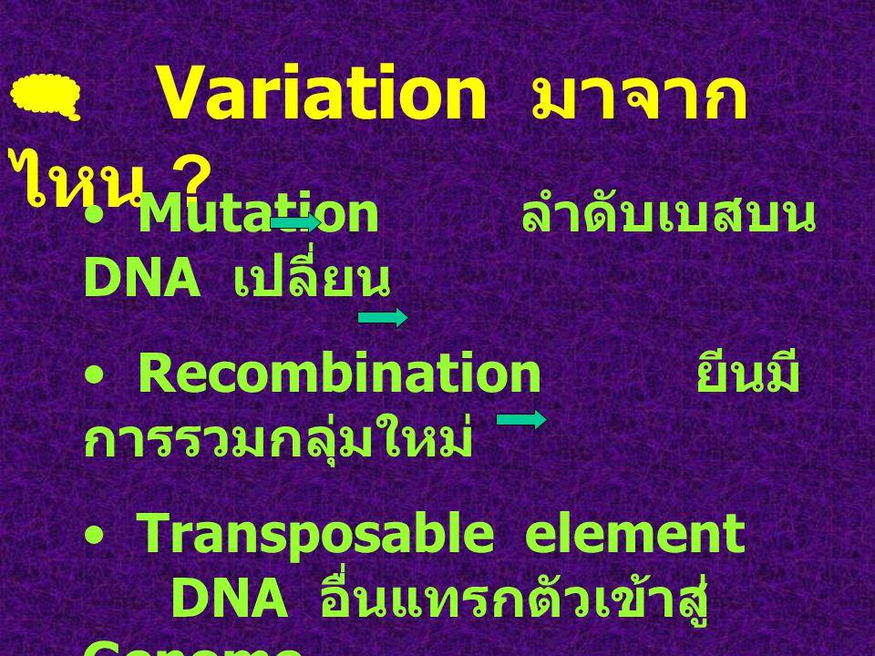  การคงอยู่ใน ประชากรของ variant R.C Punnett ศึกษา ลักษณะ brachydaetyly ( ควบคุมด้วย Dominant gene) เกือบทุกคนในประชากร ต้องมีลักษณะนี้