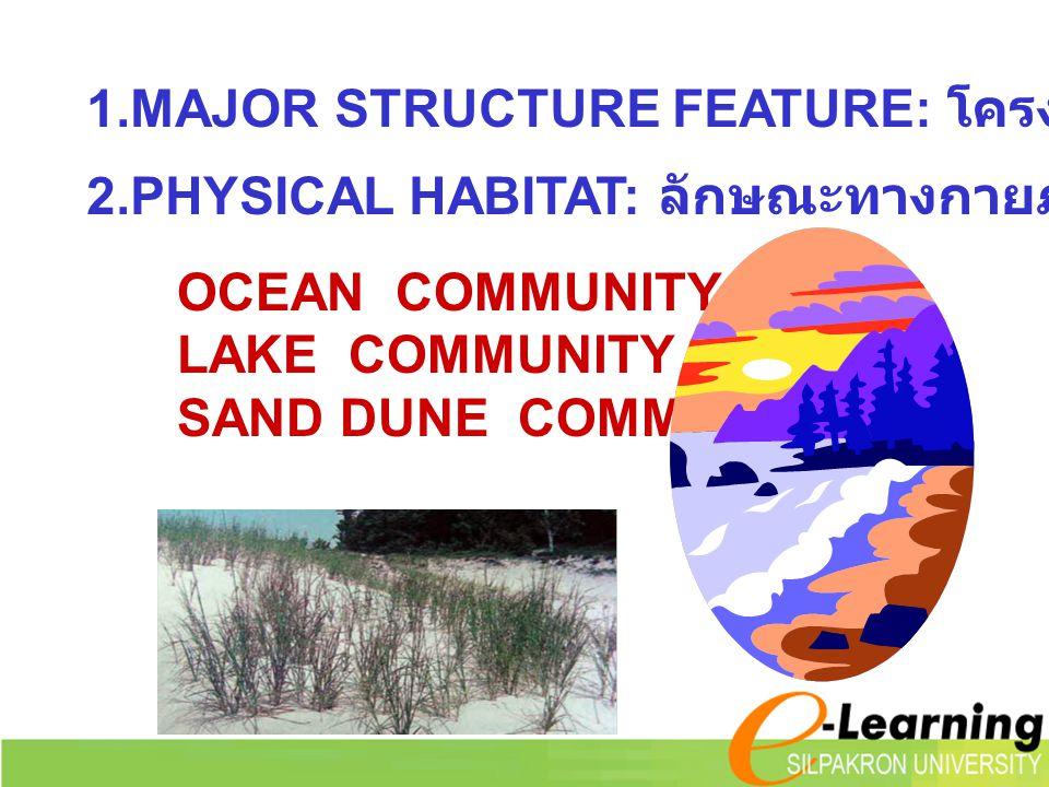 2.PHYSICAL HABITAT: ลักษณะทางกายภาพของสังคม OCEAN COMMUNITY LAKE COMMUNITY SAND DUNE COMMUNITY 1.MAJOR STRUCTURE FEATURE: โครงสร้างหลักของสังคม
