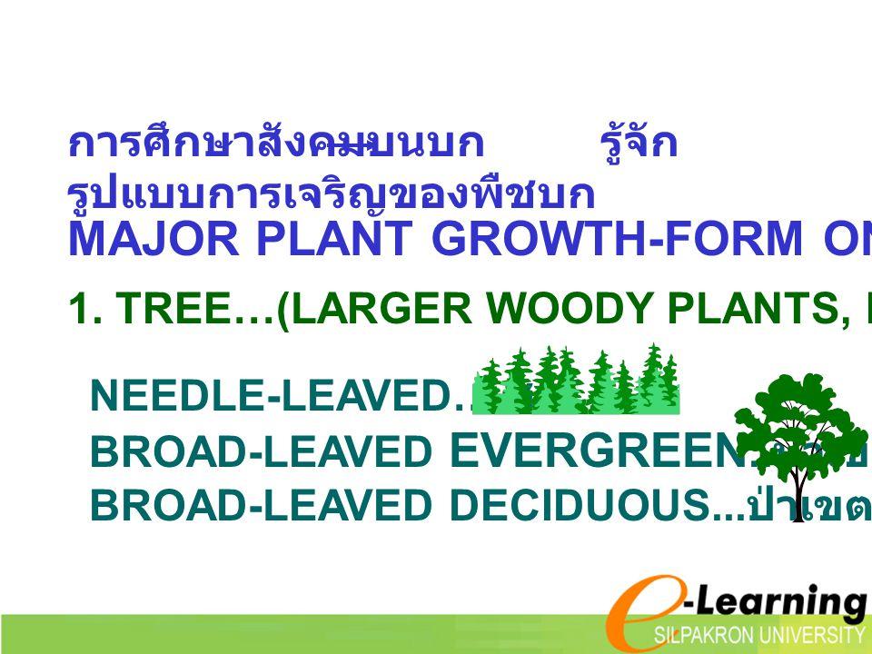 MAJOR PLANT GROWTH-FORM ON LAND การศึกษาสังคมบนบก รู้จัก รูปแบบการเจริญของพืชบก 1. TREE…(LARGER WOODY PLANTS, MOSTLY > 3 M.) NEEDLE-LEAVED…. สน BROAD-