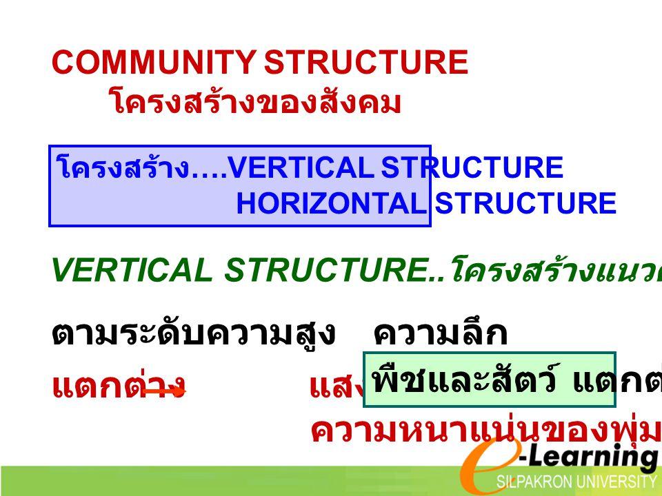 COMMUNITY STRUCTURE โครงสร้างของสังคม โครงสร้าง ….VERTICAL STRUCTURE HORIZONTAL STRUCTURE VERTICAL STRUCTURE.. โครงสร้างแนวดิ่ง... ระดับ ตามระดับความส