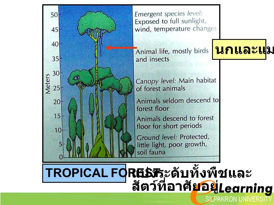 TROPICAL FOREST แบ่งระดับทั้งพืชและ สัตว์ที่อาศัยอยู่ นกและแมลง