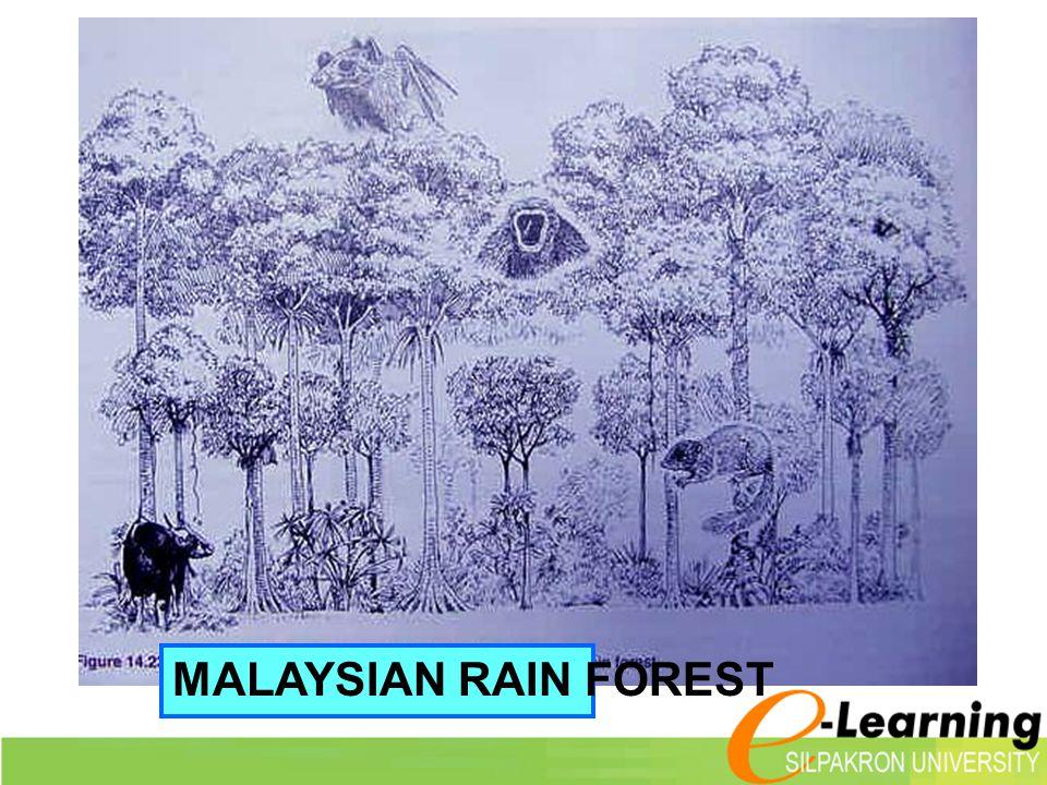 MALAYSIAN RAIN FOREST