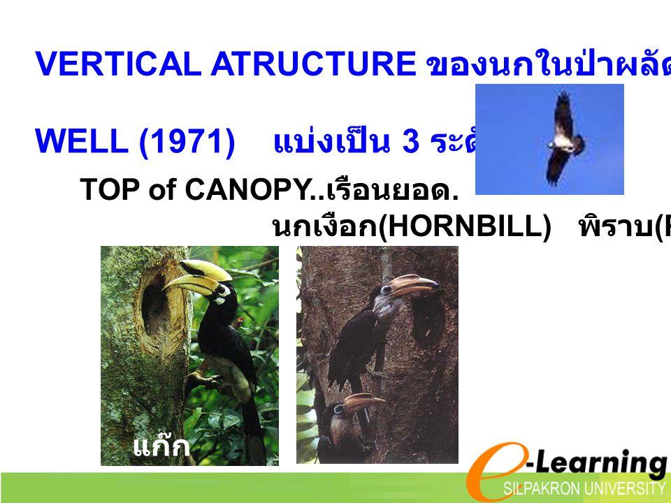 VERTICAL ATRUCTURE ของนกในป่าผลัดใบ WELL (1971) แบ่งเป็น 3 ระดับ TOP of CANOPY.. เรือนยอด. นกเงือก (HORNBILL) พิราบ (PIGEON) แก๊ก