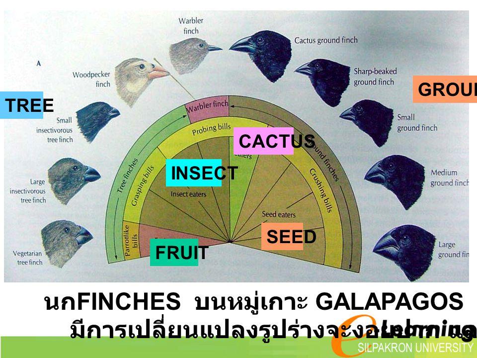 นก FINCHES บนหมู่เกาะ GALAPAGOS มีการเปลี่ยนแปลงรูปร่างจะงอยปาก และบริเวณหากิน TREE GROUND SEED FRUIT INSECT CACTUS