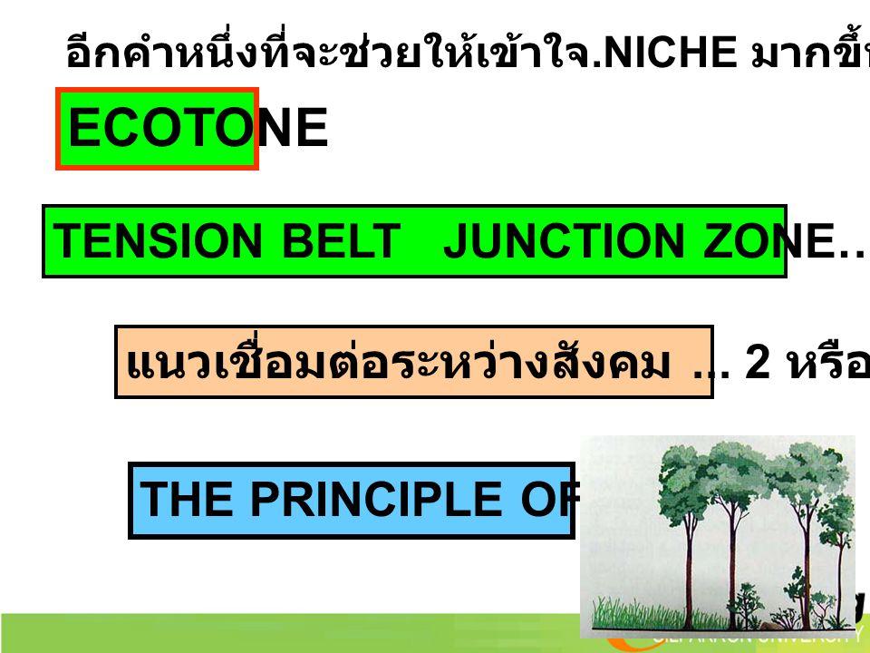 TENSION BELT JUNCTION ZONE… แนวเชื่อมต่อ อีกคำหนึ่งที่จะช่วยให้เข้าใจ.NICHE มากขึ้น แนวเชื่อมต่อระหว่างสังคม... 2 หรือ มากกว่า THE PRINCIPLE OF EDGES