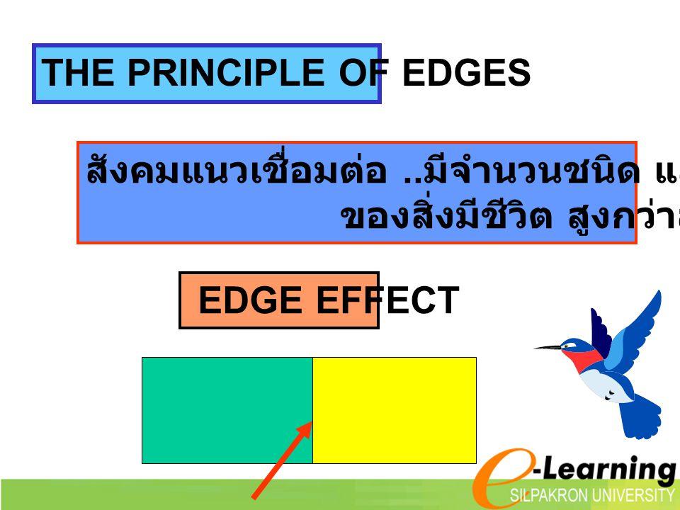 สังคมแนวเชื่อมต่อ.. มีจำนวนชนิด และความหนาแน่น ของสิ่งมีชีวิต สูงกว่าสังคมทั่วไป EDGE EFFECT