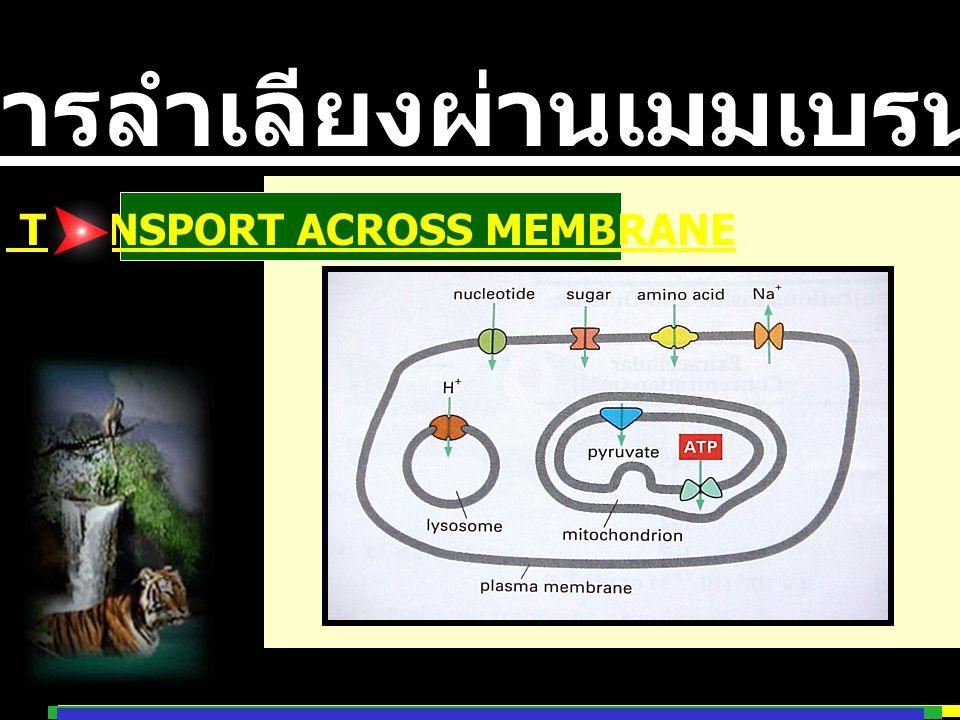 การลำเลียงผ่านเมมเบรน TRANSPORT ACROSS MEMBRANE