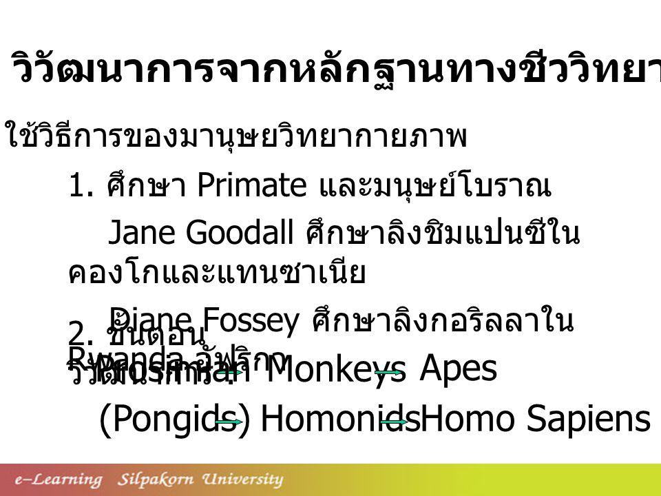 1. ศึกษา Primate และมนุษย์โบราณ Jane Goodall ศึกษาลิงชิมแปนซีใน คองโกและแทนซาเนีย Diane Fossey ศึกษาลิงกอริลลาใน Rwanda อัฟริกา 2. ขั้นตอน วิวัฒนาการ