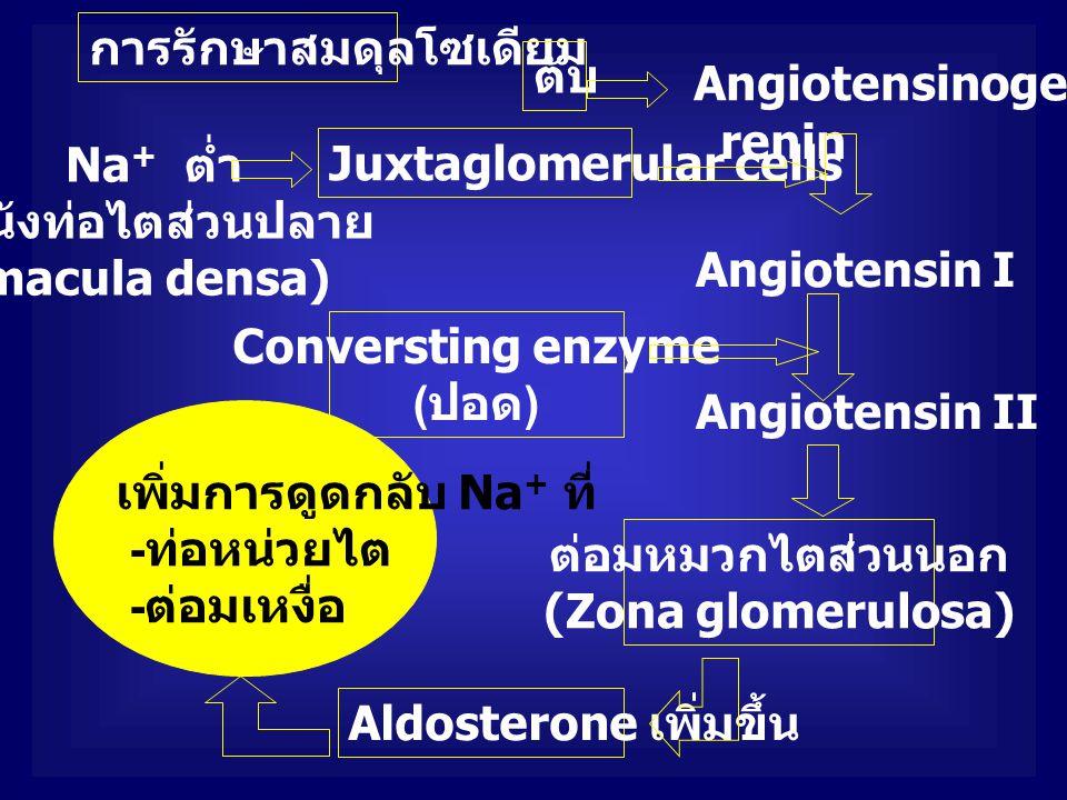 Na + ต่ำ ( ผนังท่อไตส่วนปลาย macula densa) การรักษาสมดุลโซเดียม Juxtaglomerular cells renin Angiotensinogen ตับ Angiotensin I Angiotensin II Conversti
