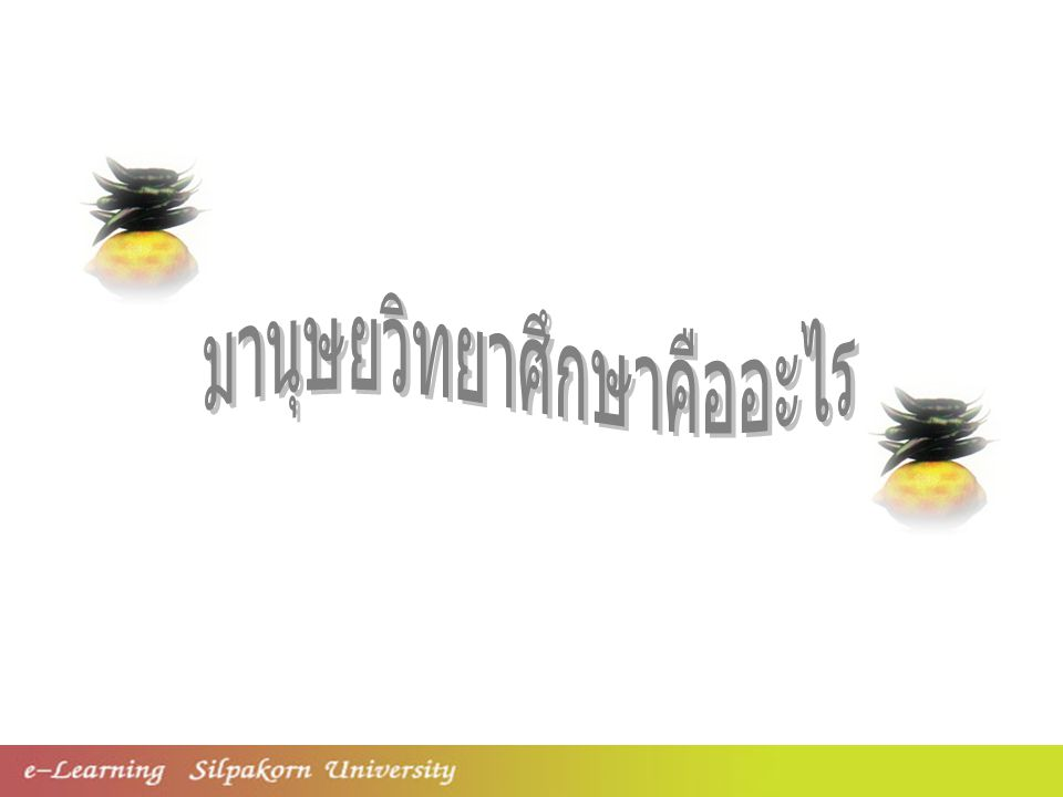 มานุษยวิทยาศึกษาคือ อะไร Anthropos (Man,Human beings) ANTHROPOLOGY Logos (To reason,to study) + A story of mankind