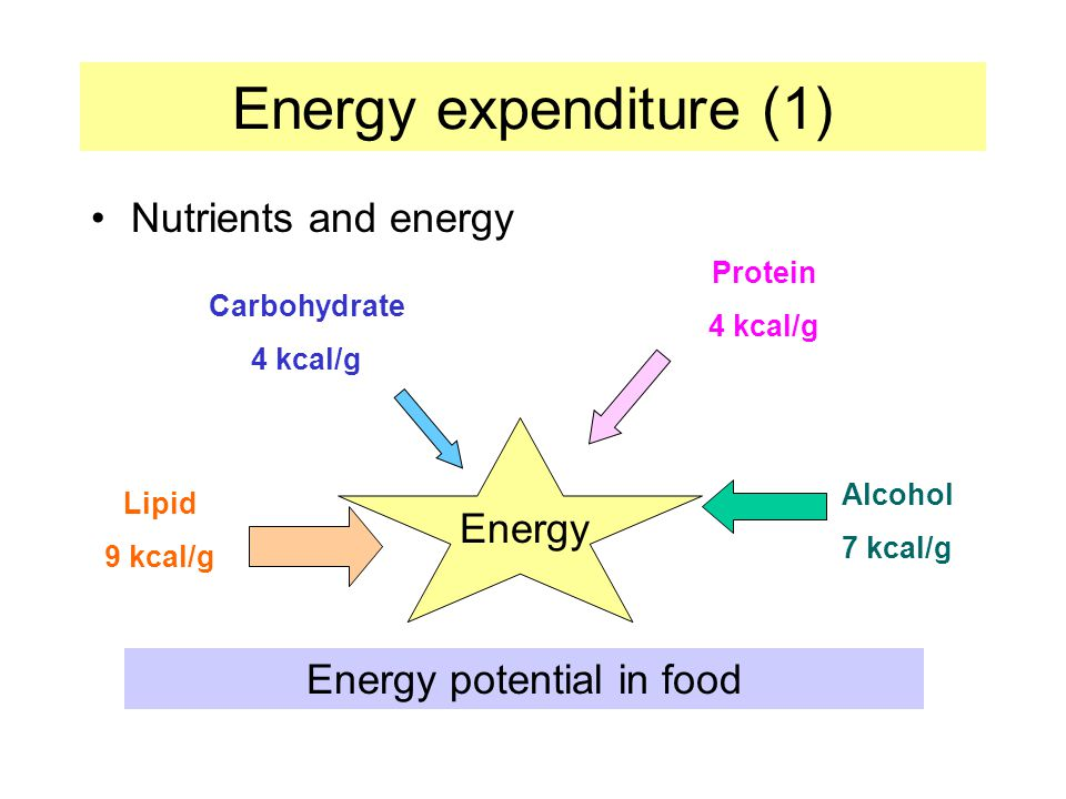 Energy expenditure (1) Nutrients and energy Energy Energy potential in food Alcohol 7 kcal/g Protein 4 kcal/g Carbohydrate 4 kcal/g Lipid 9 kcal/g