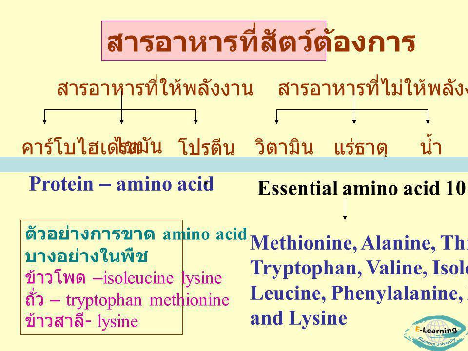 สารอาหารที่ให้พลังงาน คาร์โบไฮเดรต โปรตีน ไขมัน สารอาหารที่ไม่ให้พลังงาน วิตามินน้ำ แร่ธาตุ สารอาหารที่สัตว์ต้องการ Protein – amino acid Methionine, Alanine, Threonine, Tryptophan, Valine, Isoleucine Leucine, Phenylalanine, Histidine and Lysine ตัวอย่างการขาด amino acid บางอย่างในพืช ข้าวโพด –isoleucine lysine ถั่ว – tryptophan methionine ข้าวสาลี - lysine Essential amino acid 10 ชนิด