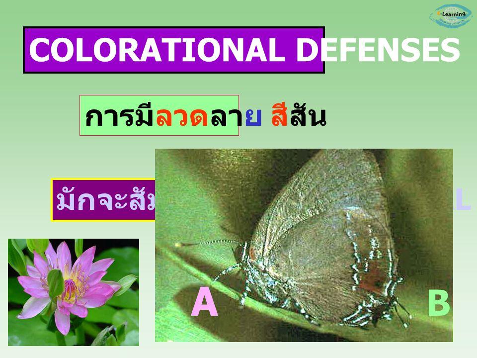 มักจะสัมพันธ์กับ STRUCTURAL DEFENSES A B การมีลวดลาย สีสัน