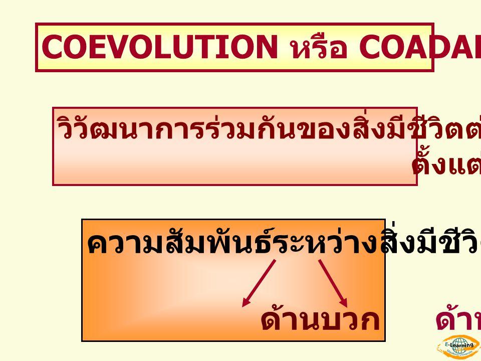 COEVOLUTION หรือ COADAPTATION วิวัฒนาการร่วมกันของสิ่งมีชีวิตต่างชนิดกัน ตั้งแต่ 2 ชนิด ขึ้นไป ความสัมพันธ์ระหว่างสิ่งมีชีวิต ด้านบวก ด้านลบ