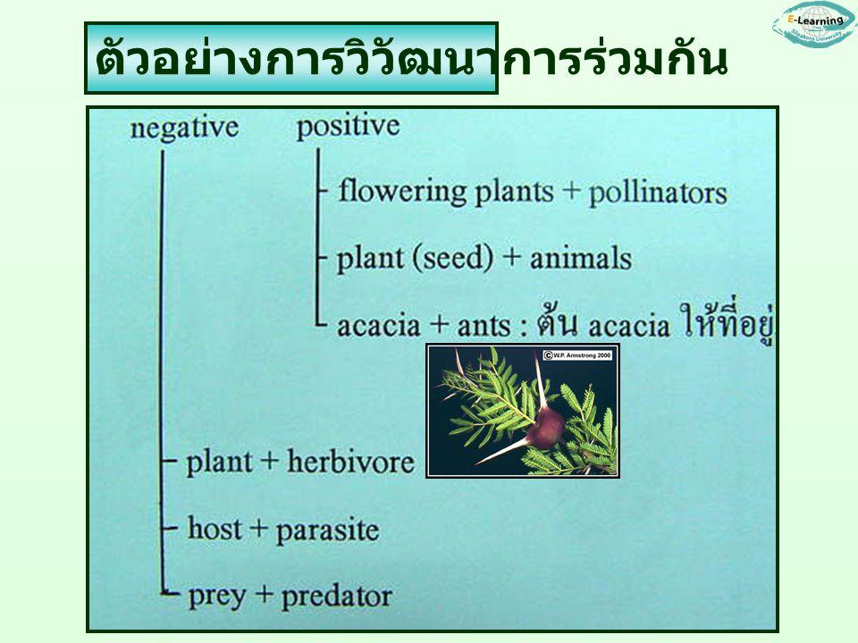 ตัวอย่างการวิวัฒนาการร่วมกัน