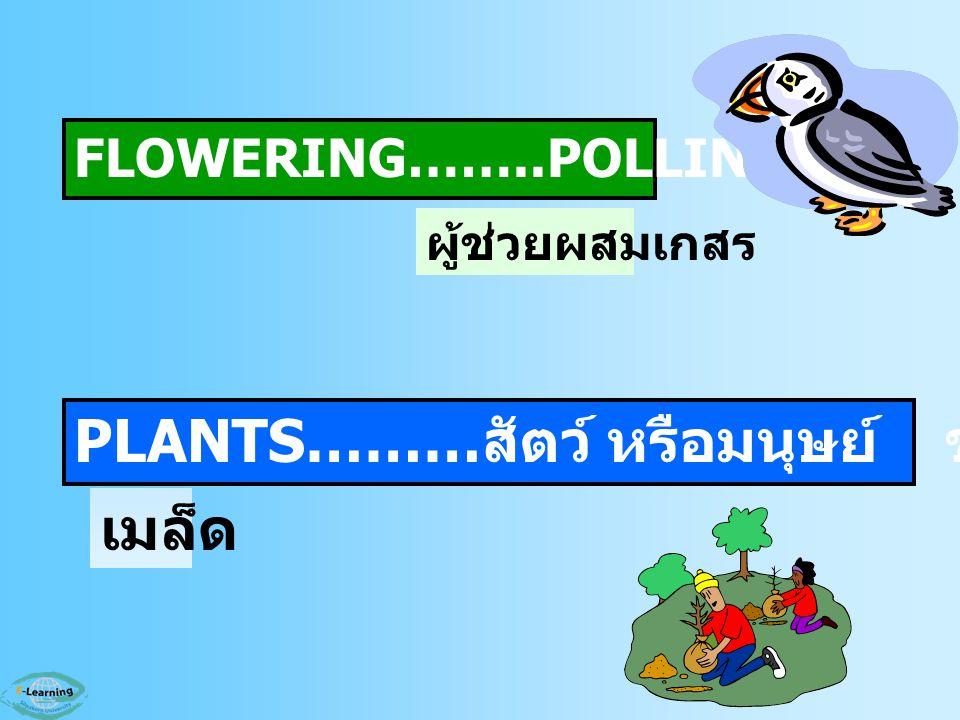 FLOWERING……..POLLINATORS PLANTS……… สัตว์ หรือมนุษย์ ช่วยกระจายพันธุ์ ผู้ช่วยผสมเกสร เมล็ด