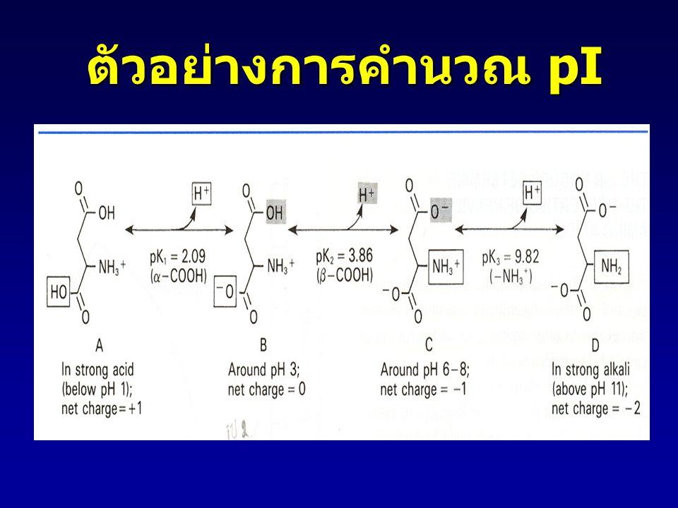 ตัวอย่างการคำนวณ pI