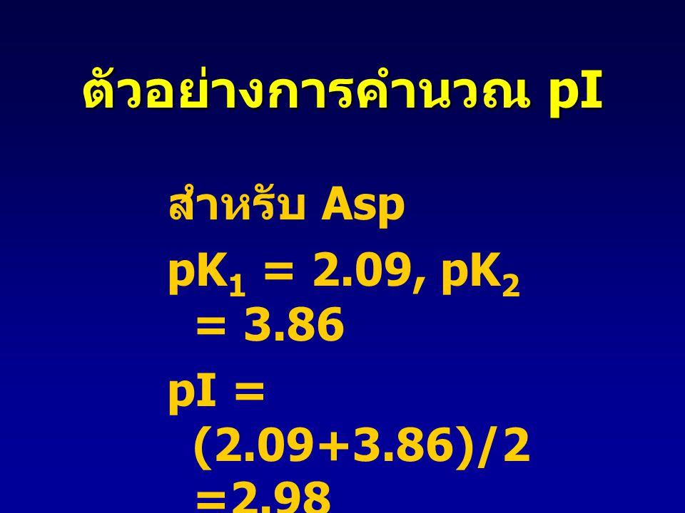 สำหรับ Asp pK 1 = 2.09, pK 2 = 3.86 pI = (2.09+3.86)/2 =2.98