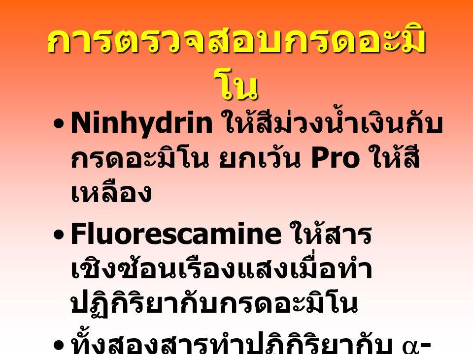 การตรวจสอบกรดอะมิ โน Ninhydrin ให้สีม่วงน้ำเงินกับ กรดอะมิโน ยกเว้น Pro ให้สี เหลือง Fluorescamine ให้สาร เชิงซ้อนเรืองแสงเมื่อทำ ปฏิกิริยากับกรดอะมิโน ทั้งสองสารทำปฏิกิริยากับ  - amino group