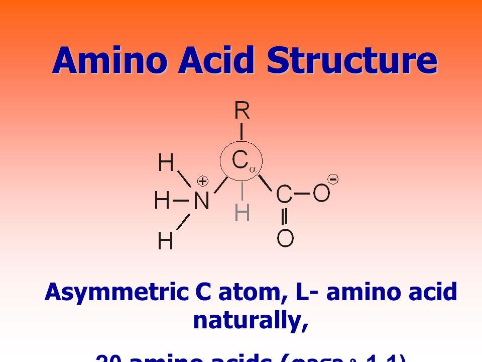 Amino Acid Structure Asymmetric C atom, L- amino acid naturally, 20 amino acids ( ตาราง 1.1)