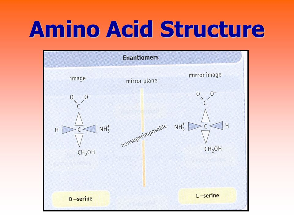 Amino Acid Structure Asymmetric C atom, L- amino acid naturally, 20 amino acids ( ตาราง 1.1)