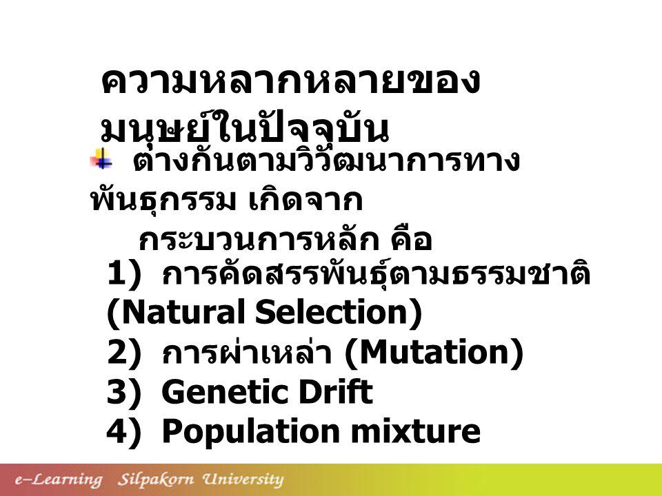 ความหลากหลายของ มนุษย์ในปัจจุบัน 1) การคัดสรรพันธุ์ตามธรรมชาติ (Natural Selection) 2) การผ่าเหล่า (Mutation) 3) Genetic Drift 4) Population mixture ต่