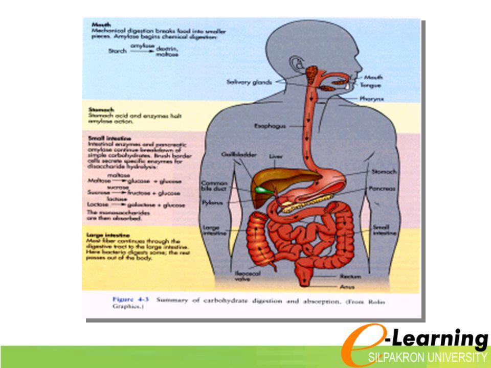 Polysacchari des  Homopolysacchari des - แป้ง (starch) - ไกลโคเจน (glycogen) : ตับ กล้ามเนื้อ - เซลลูโลส (cellulose) : ปุยฝ้าย - ไคติน (chitin) : เปลือก กุ้ง - ปู  Heteropolysaccharides - peptidoglycan : ในแบคทีเรีย - glycoaminoglycan : ในข้อกระดูก