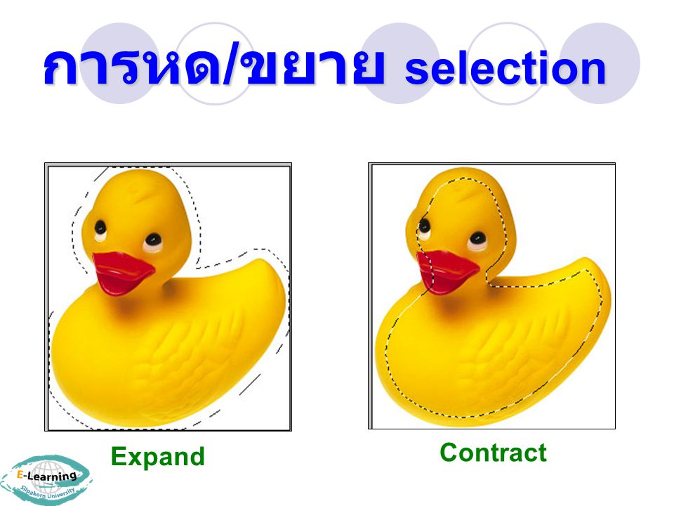Expand Contract การหด / ขยาย selection