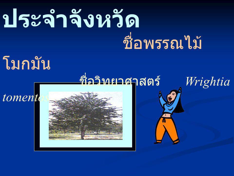 ต้นไม้ ประจำจังหวัด ชื่อพรรณไม้ โมกมัน ชื่อวิทยาศาสตร์ Wrightia tomentosa