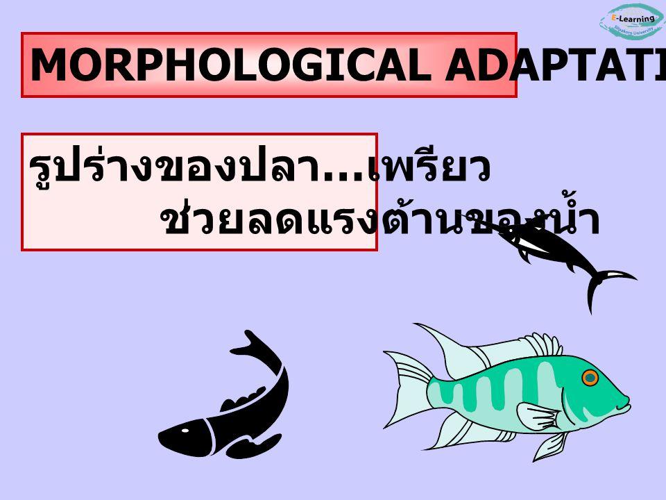 รูปแบบการปรับตัว MORPHOLOGICAL A. การปรับด้านโครงสร้าง รูปร่าง PHYSIOLOGICAL A. การปรับด้านสรีระ การทำงานในร่างกาย BEHAVIORAL A. การปรับด้านพฤติกรรม