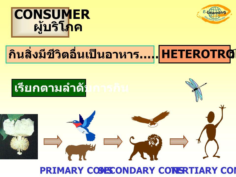 CONSUMER ผู้บริโภค กินสิ่งมีชีวิตอื่นเป็นอาหาร …… ส่วนมาก.. สัตว์ เรียกตามลำดับการกิน HETEROTROPHS TERTIARY CONSSECONDARY CONSPRIMARY CONS