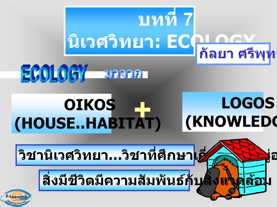 บทที่ 7 นิเวศวิทยา : ECOLOGY กัลยา ศรีพุทธชาติ OIKOS (HOUSE..HABITAT) LOGOS (KNOWLEDGE) วิชานิเวศวิทยา … วิชาที่ศึกษาเกี่ยวกับที่อยู่อาศัย สิ่งมีชีวิต