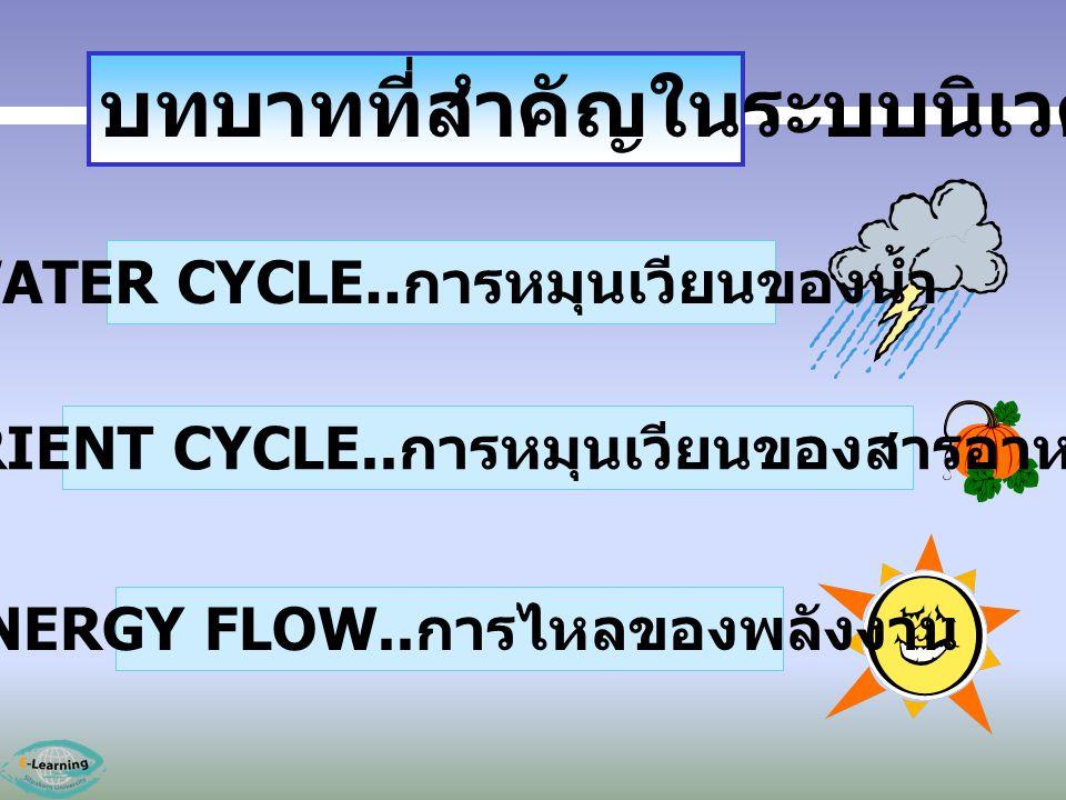 WATER CYCLE.. การหมุนเวียนของน้ำ NUTRIENT CYCLE.. การหมุนเวียนของสารอาหาร ENERGY FLOW.. การไหลของพลังงาน บทบาทที่สำคัญในระบบนิเวศ