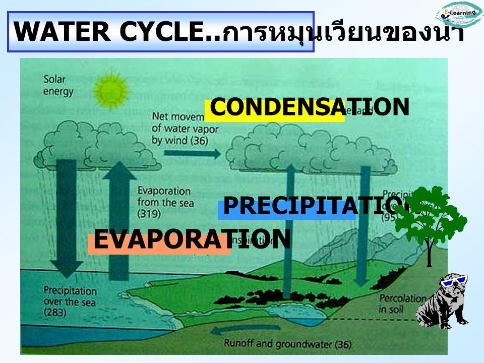 WATER CYCLE.. การหมุนเวียนของน้ำ EVAPORATION PRECIPITATION CONDENSATION