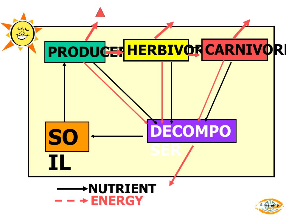 PRODUCER HERBIVORE CARNIVORE DECOMPO SER SO IL NUTRIENT ENERGY