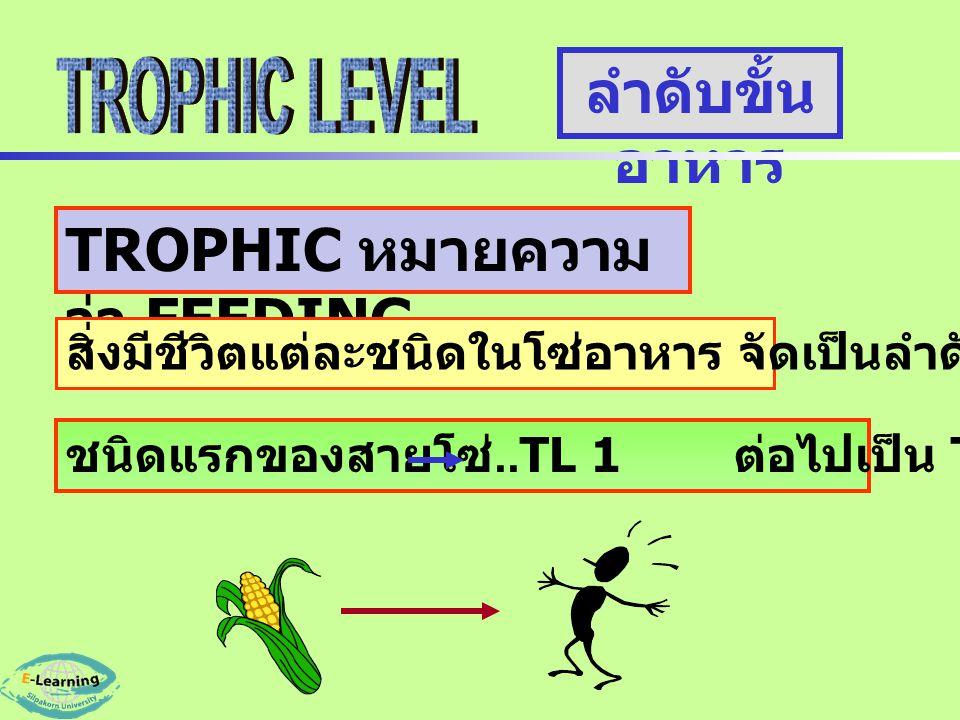 ลำดับขั้น อาหาร TROPHIC หมายความ ว่า FEEDING สิ่งมีชีวิตแต่ละชนิดในโซ่อาหาร จัดเป็นลำดับขั้นอาหาร ชนิดแรกของสายโซ่..TL 1 ต่อไปเป็น TL 2,3,4.. ตามลำดับ