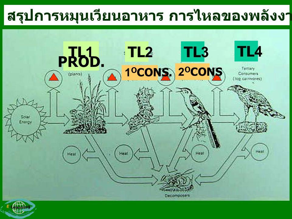 สรุปการหมุนเวียนอาหาร การไหลของพลังงาน และ TROPHIC LEVEL TL1 PROD. TL2TL3 TL4 1 O CONS. 2 O CONS