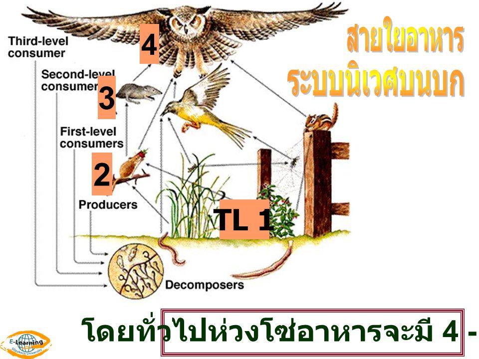 TL 1 2 3 4 โดยทั่วไปห่วงโซ่อาหารจะมี 4 - 5 TL