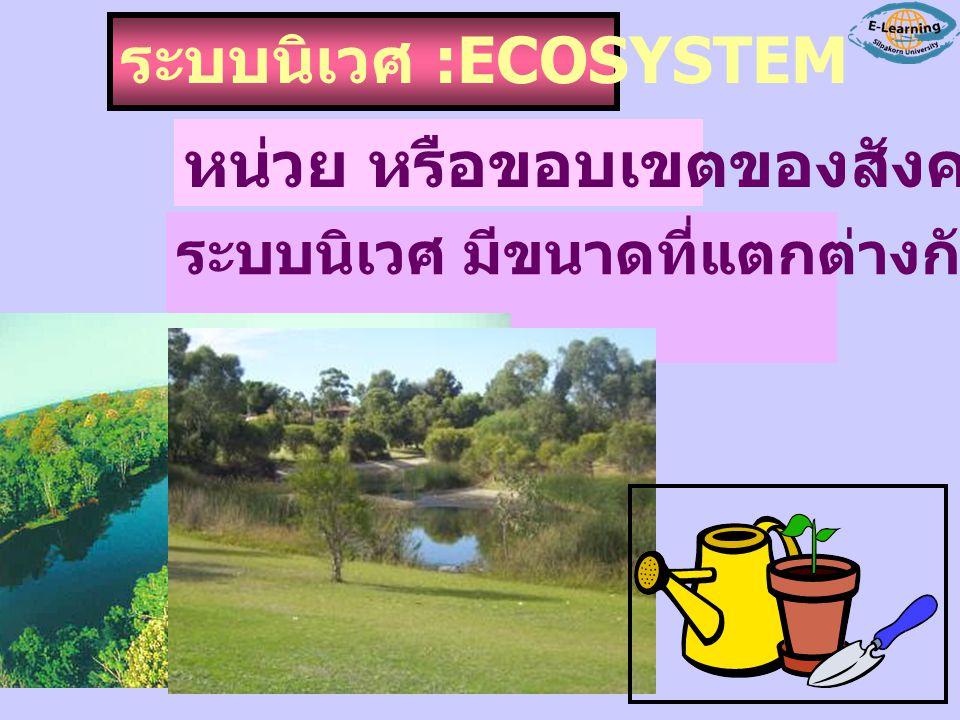ระบบนิเวศ :ECOSYSTEM หน่วย หรือขอบเขตของสังคม ระบบนิเวศ มีขนาดที่แตกต่างกันไป ใหญ่ เล็ก