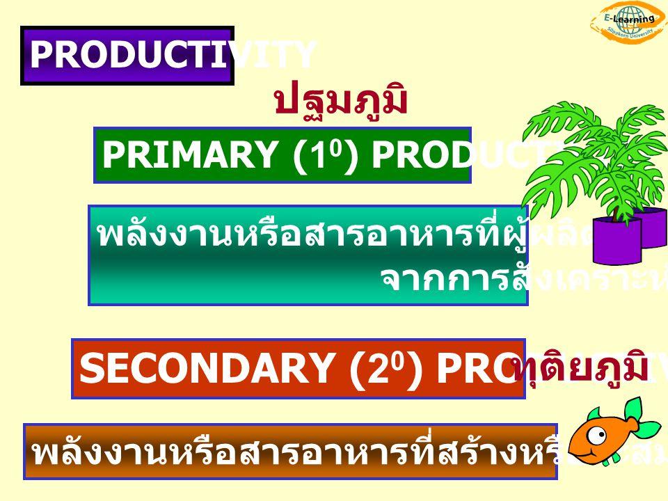 PRODUCTIVITY PRIMARY (1 0 ) PRODUCTIVITY SECONDARY (2 0 ) PRODUCTIVITY พลังงานหรือสารอาหารที่ผู้ผลิตสร้างขึ้น จากการสังเคราะห์ด้วยแสง พลังงานหรือสารอา