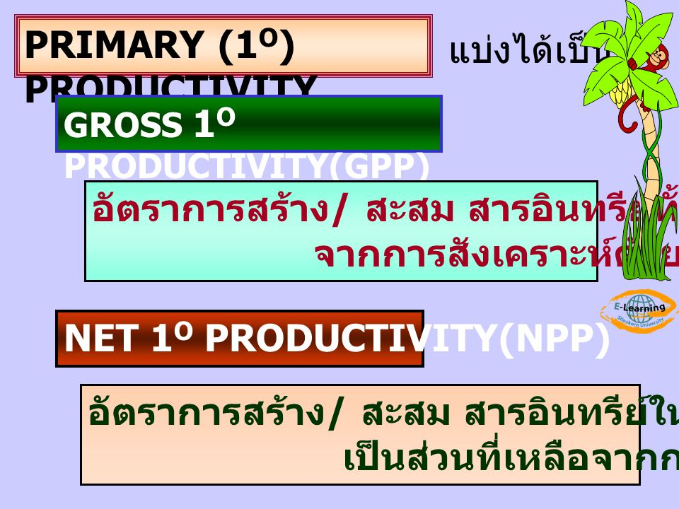 PRIMARY (1 O ) PRODUCTIVITY แบ่งได้เป็น GROSS 1 O PRODUCTIVITY(GPP) อัตราการสร้าง / สะสม สารอินทรีย์ทั้งหมด จากการสังเคราะห์ด้วยแสงของผู้ผลิต NET 1 O