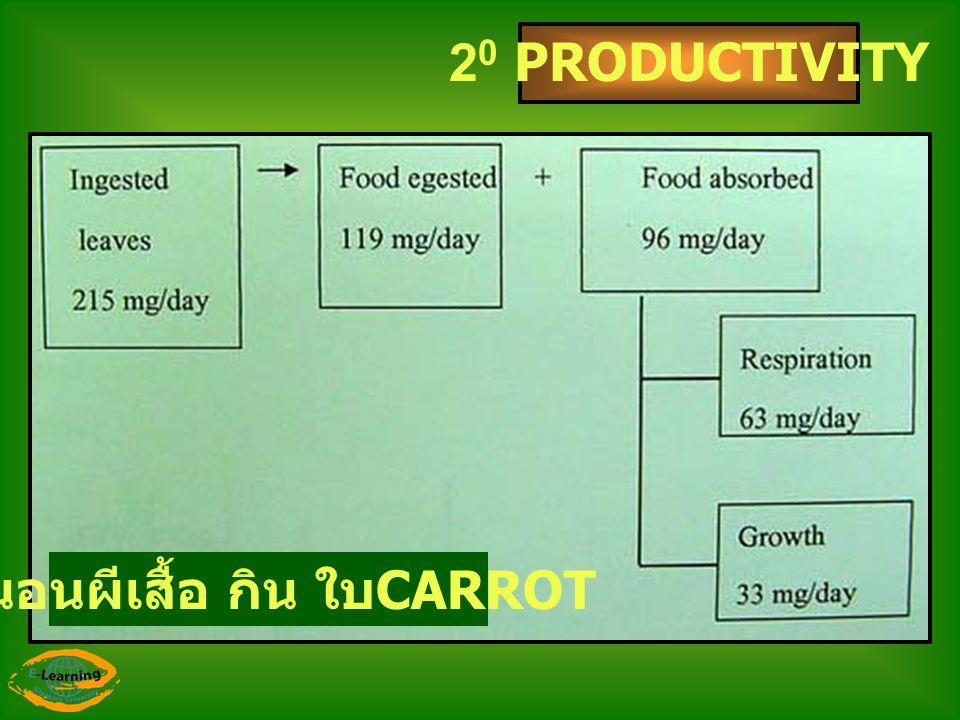 2 0 PRODUCTIVITY หนอนผีเสื้อ กิน ใบ CARROT