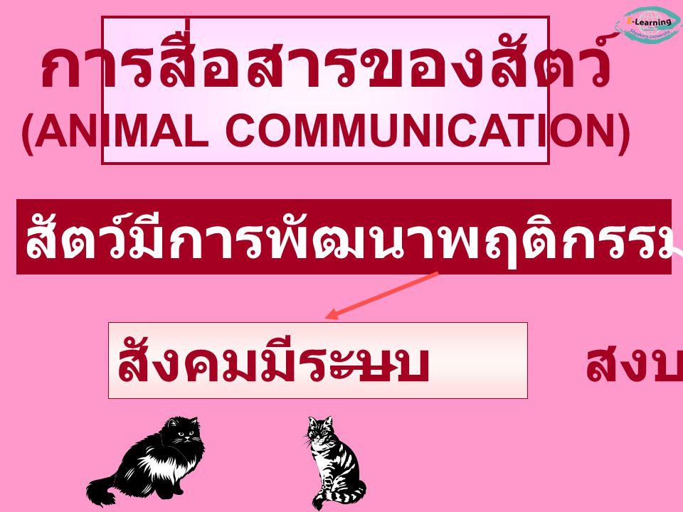 สัตว์มีการพัฒนาพฤติกรรมบางอย่างขึ้นมา สังคมมีระบบ สงบสุข การสื่อสารของสัตว์ (ANIMAL COMMUNICATION)