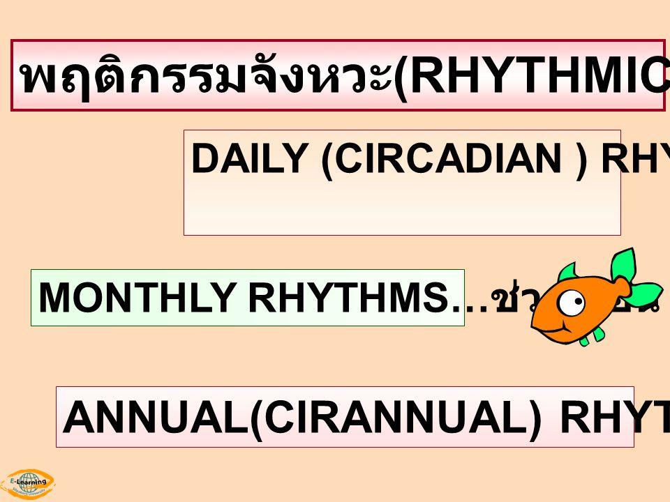 พฤติกรรมจังหวะ (RHYTHMIC BEHAVIOR) DAILY (CIRCADIAN ) RHYTHMS ช่วงวัน MONTHLY RHYTHMS… ช่วงเดือน ANNUAL(CIRANNUAL) RHYTHMS: ช่วงปี